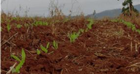 fertilidade-do-solo